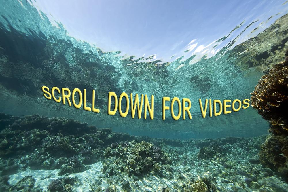 scroll g-box.jpg
