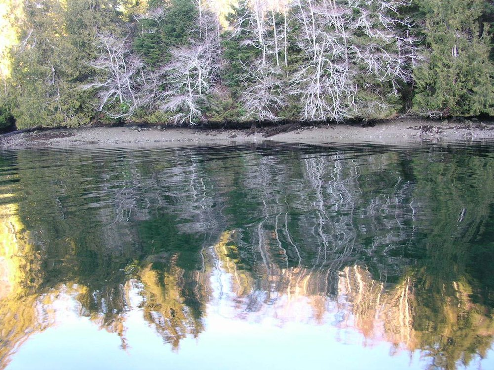 Bamfield - Grappler inlet white trees.JPG