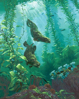 "Mark Hobson    ""Sea Otters Return"""
