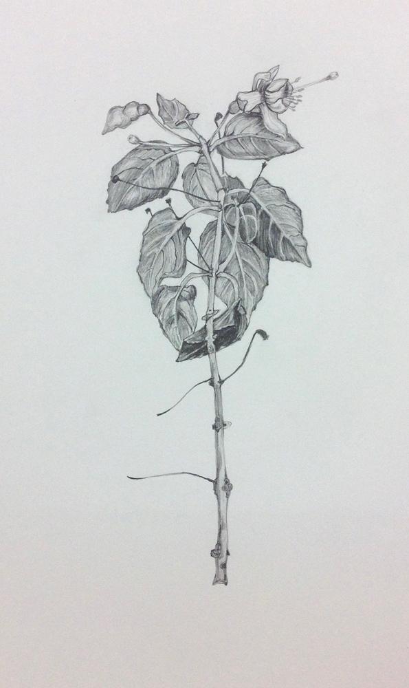 Rendered drawing - Fuschia