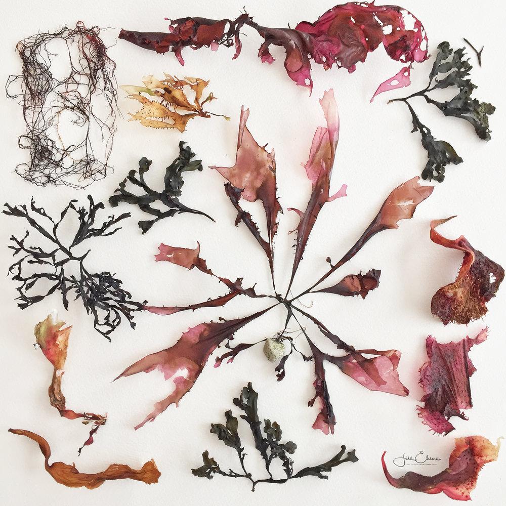 Seaweeds.jpg