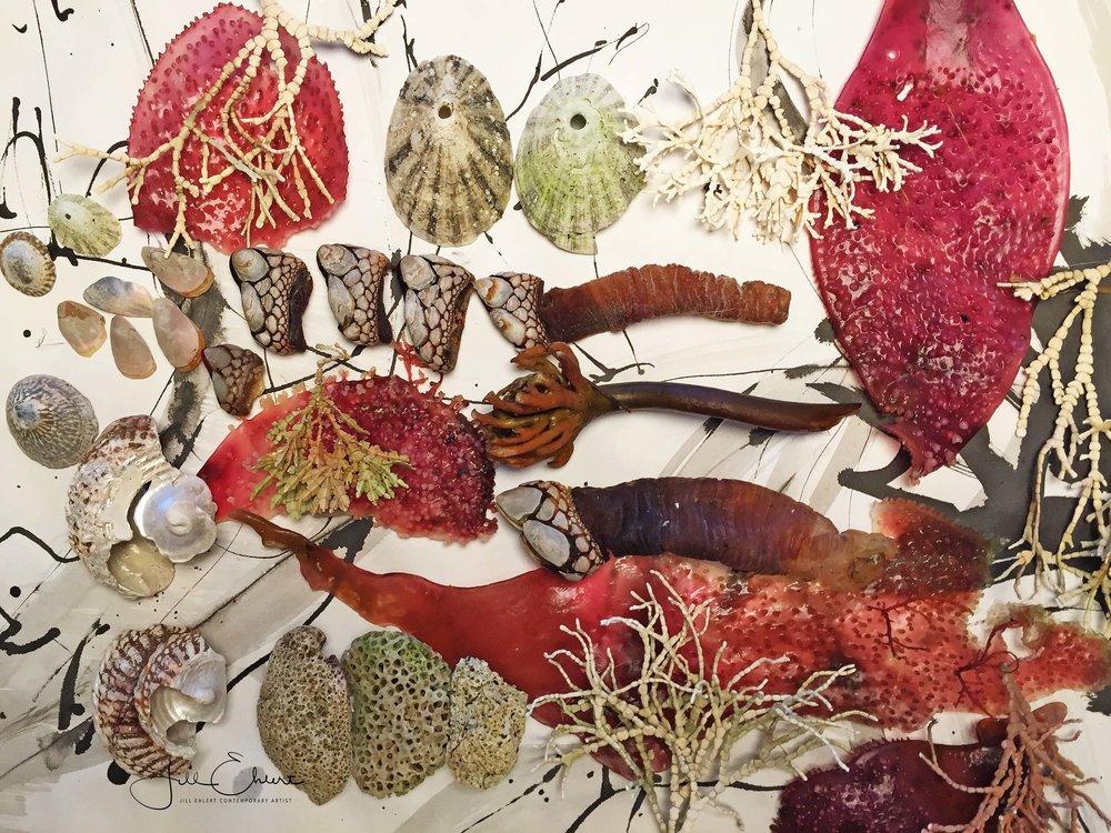SeaweedBarnaclescolleciton_3.jpg
