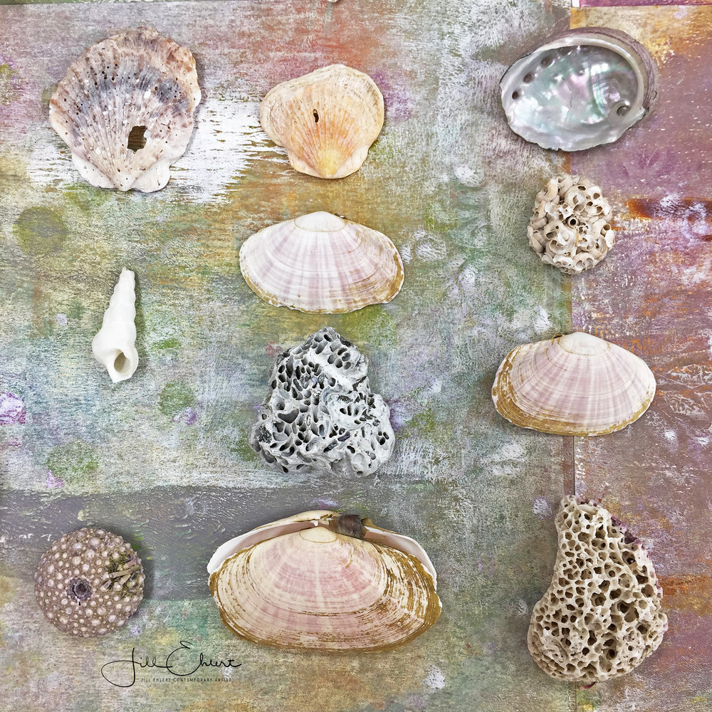 Shell collection_3.jpg