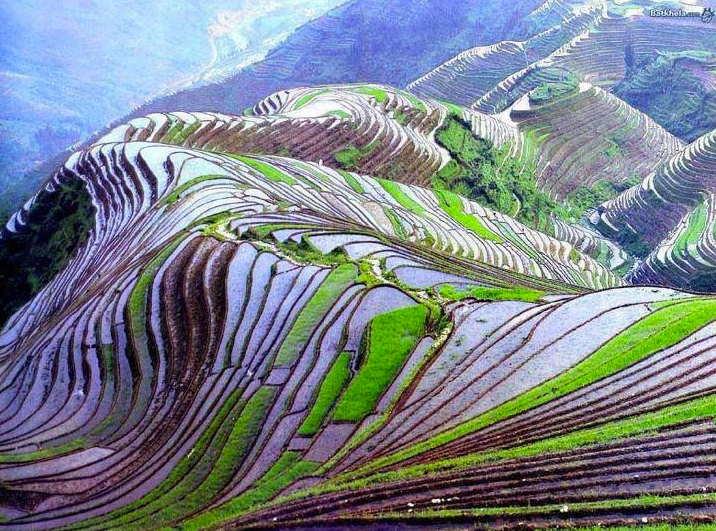 Terraced  Rice  Field, Yunnan,  China-Linda Harrison-Pinterest
