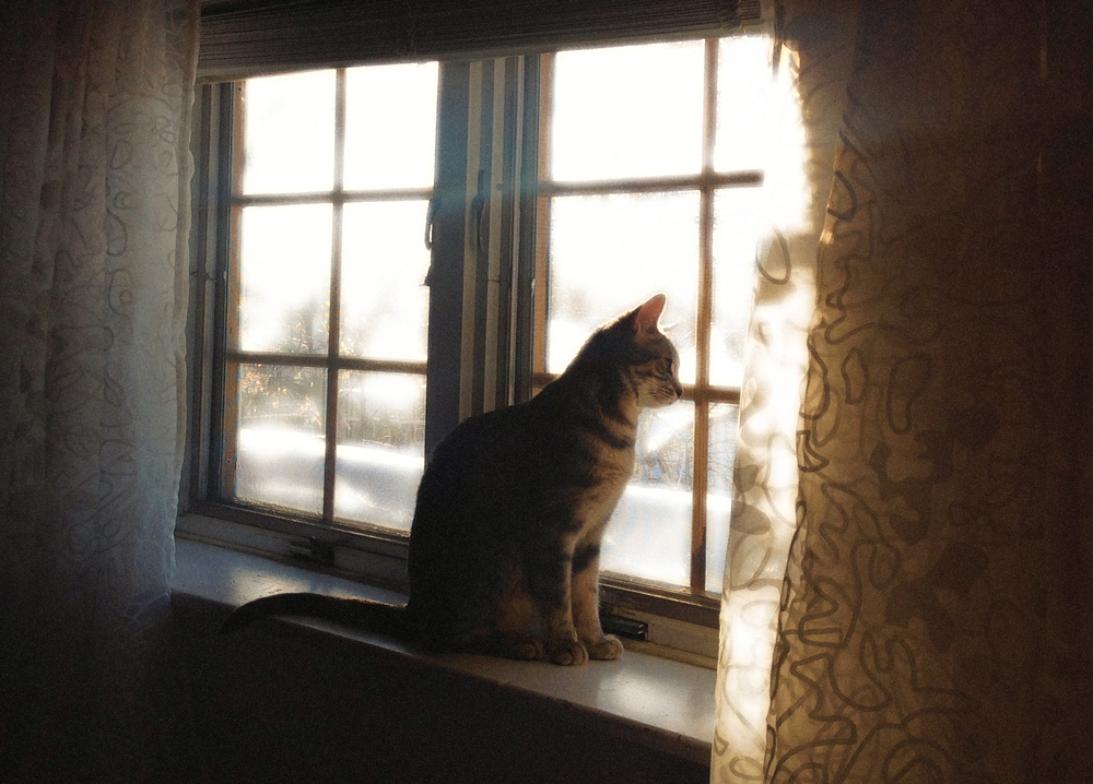Yuki Watching Snow, VHS 2014, posted December 6, wk 24