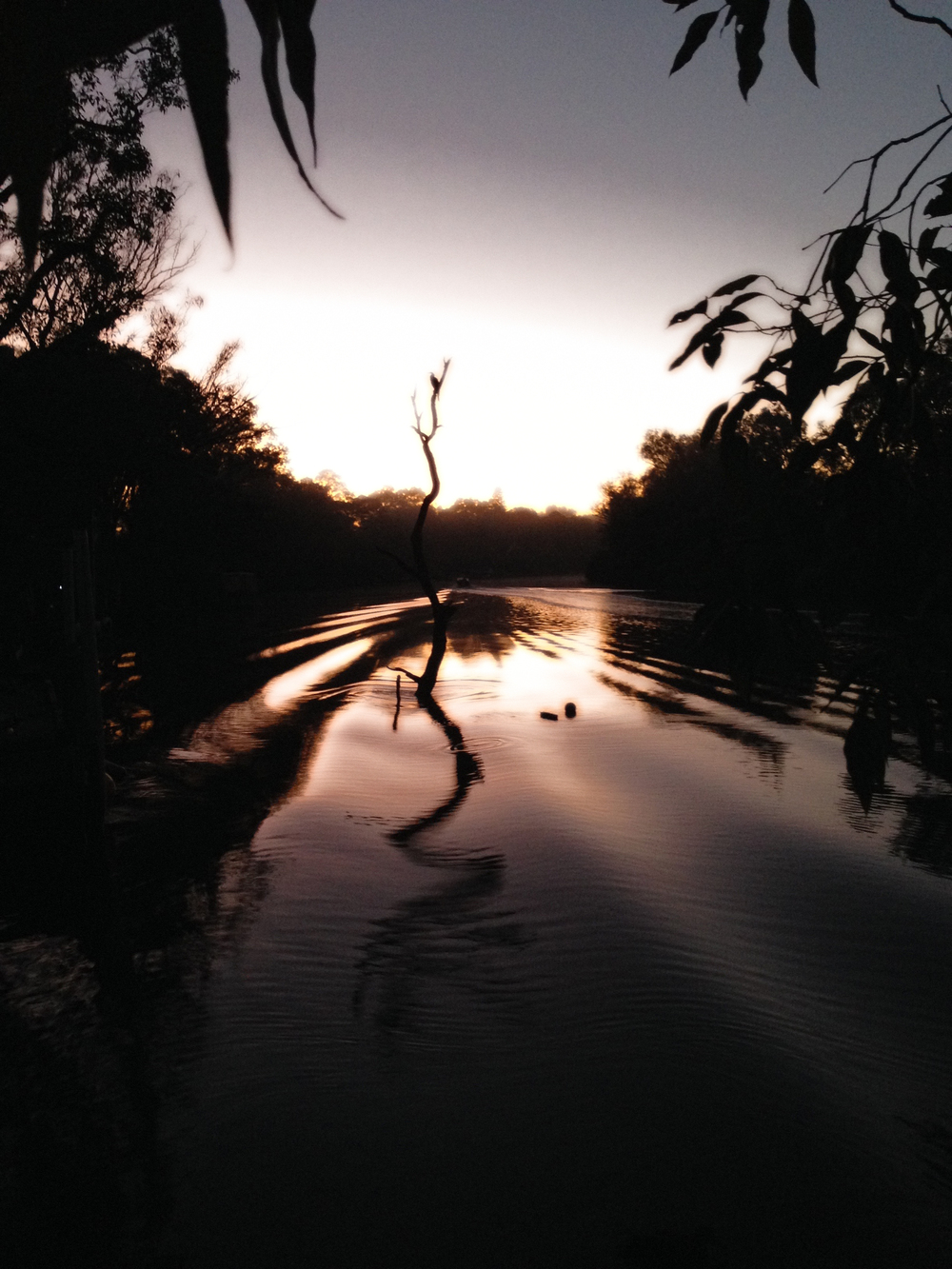 Murray River at Sunrise  Ravenswood, Western Australia VHS 2015, posted June 28, wk 52