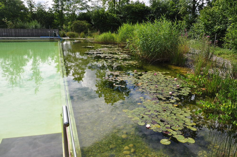 Swiss biological swimming pool. Photo courtesy of P.Strieth