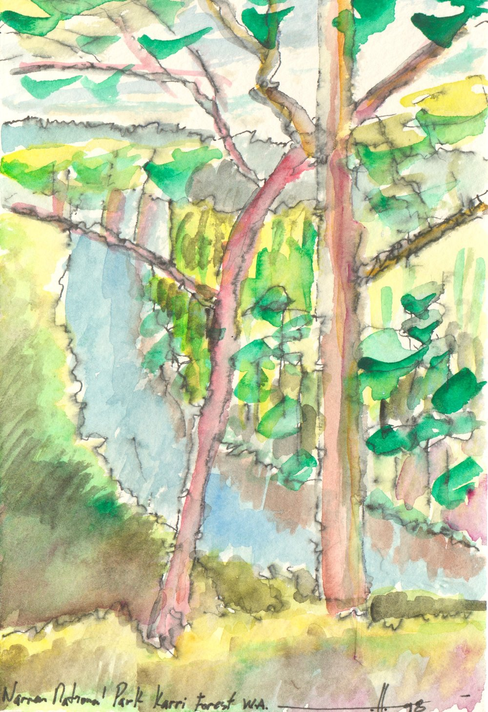 Warren National Karri Forest, W.A. 98-181211-0012.jpg