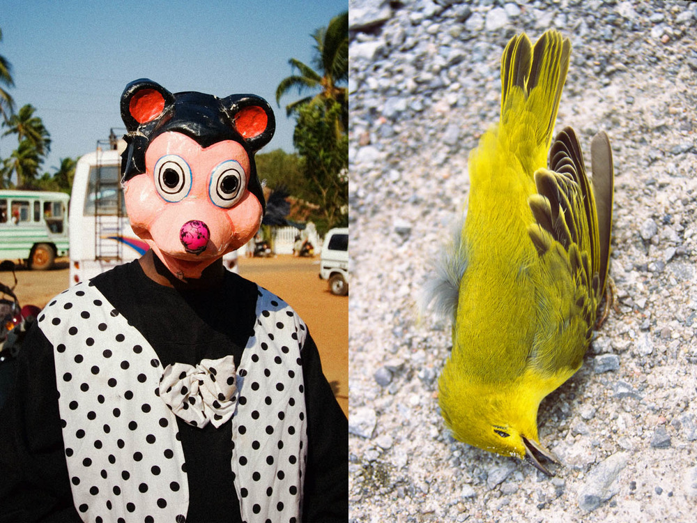 birdMOUSE-2.jpg