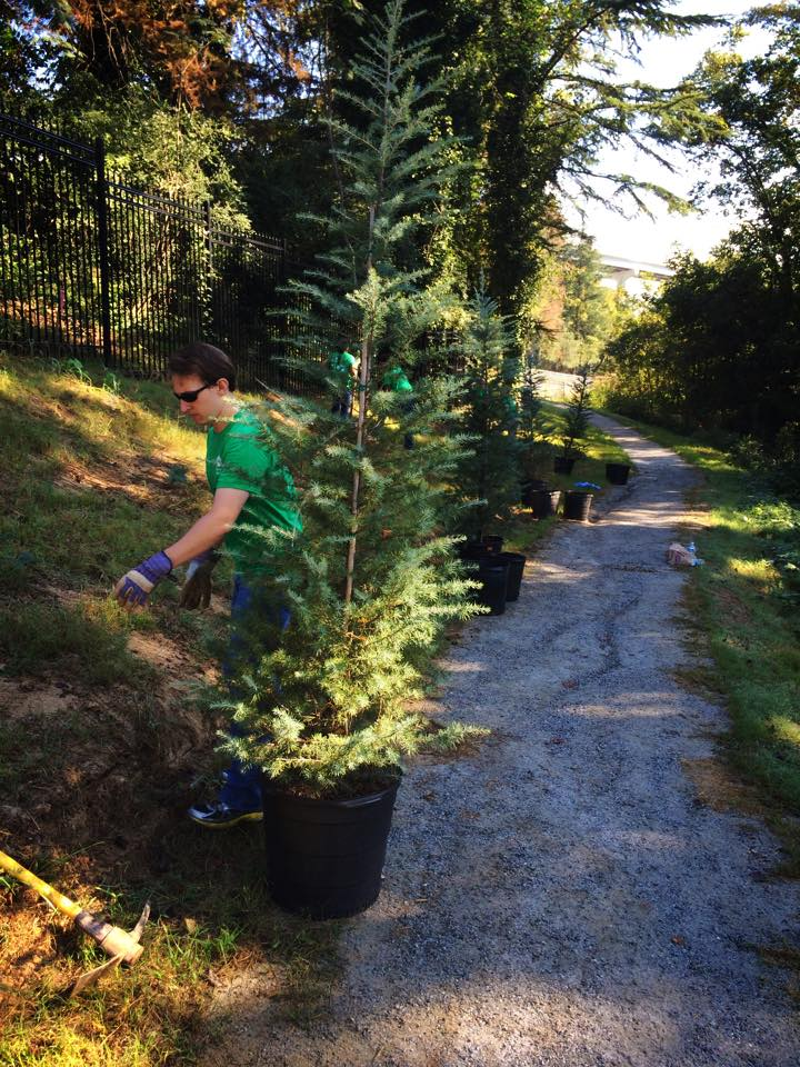 Alcoa employee Matthew Miller preps the trail side for the Deodar sapling.