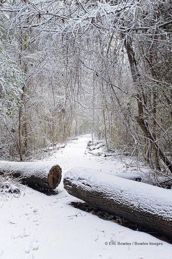 frozen trail.jpg