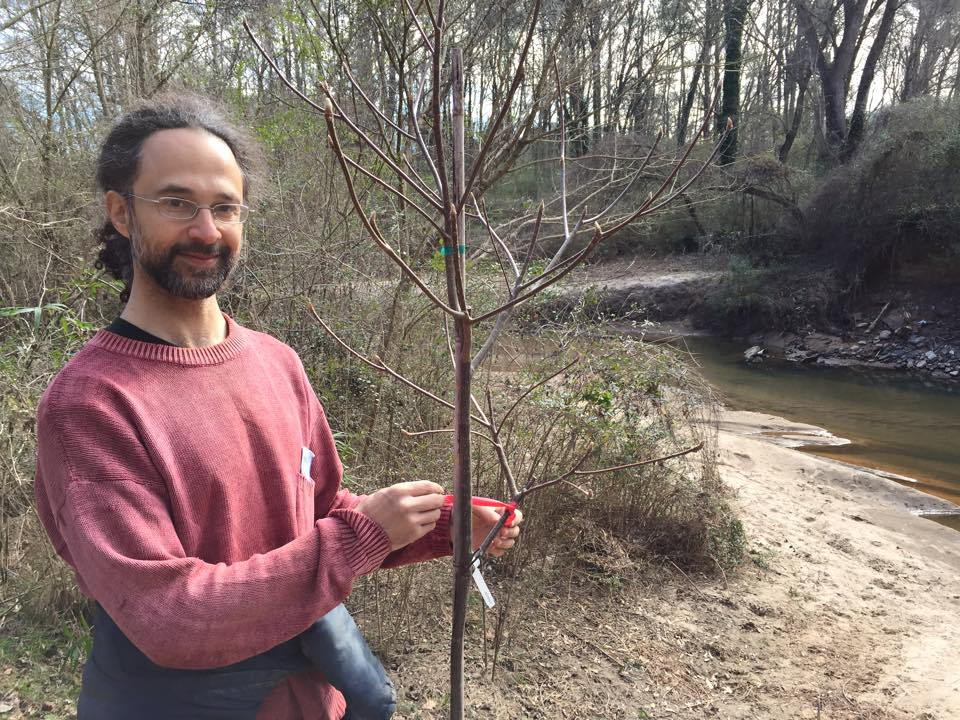 Emory physics professor Jed Brody tends a sturdy new tree.