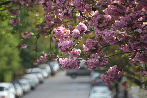 fyeahportland :     Portland Oregon in April (by  someoneelsetookmyname )