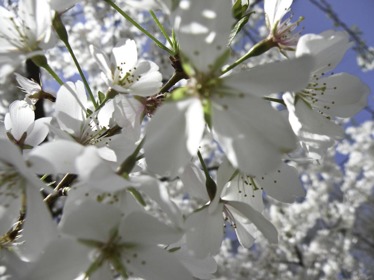 spring spring spring spring