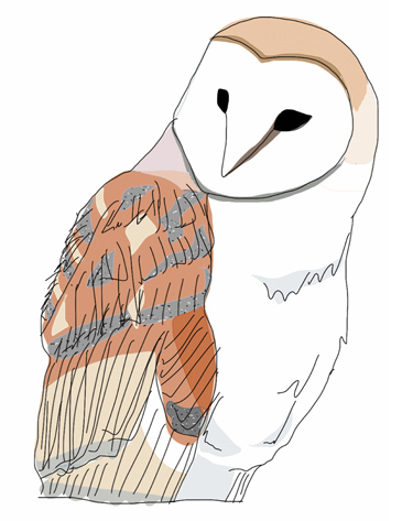 "Mrs. Barn Owl thinks you should check out  my latest comic  which is called ""Presenting Mr. Parakeet's Humongous Seed."""