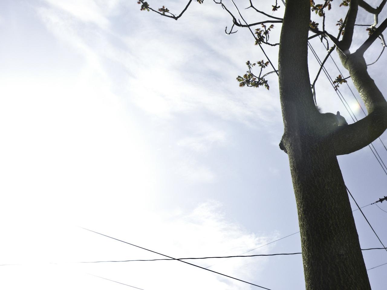 friendly squirrel in a tree