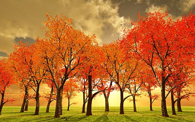 bigstockphoto_Beautiful_Autumn_3316769_web