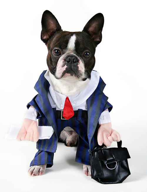 Stock Photo of a Dog Ready for a Long Day at the Office