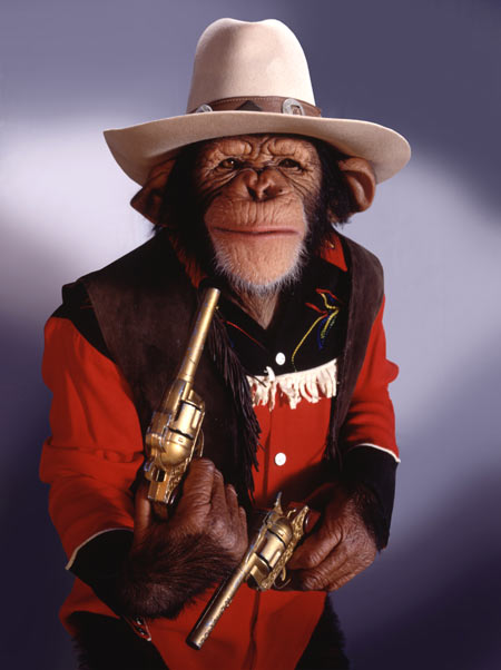 Stock Photo of a Cowboy Chimp