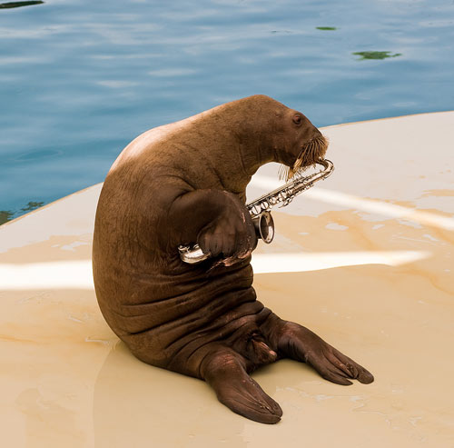 Stock Photo of a Walrus Playing a Saxaphone