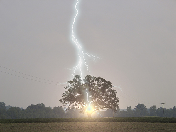 Lightning Strikes Oak Tree ©larslentz