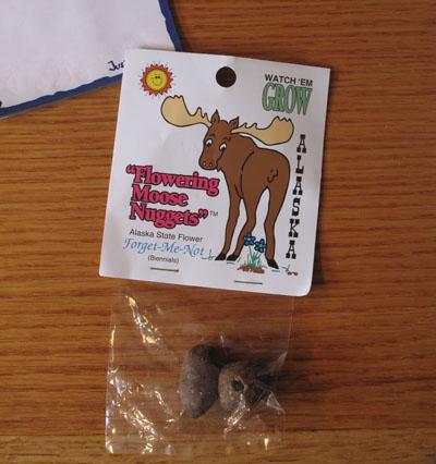 Photo of Trinket Moose Flower Forget-Me-Not
