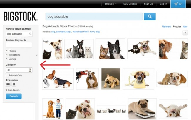 Dog adorable search. Bigstock Basics: How to Find the Perfect Image