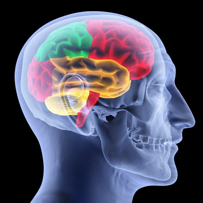 Brain image ©dim dimich