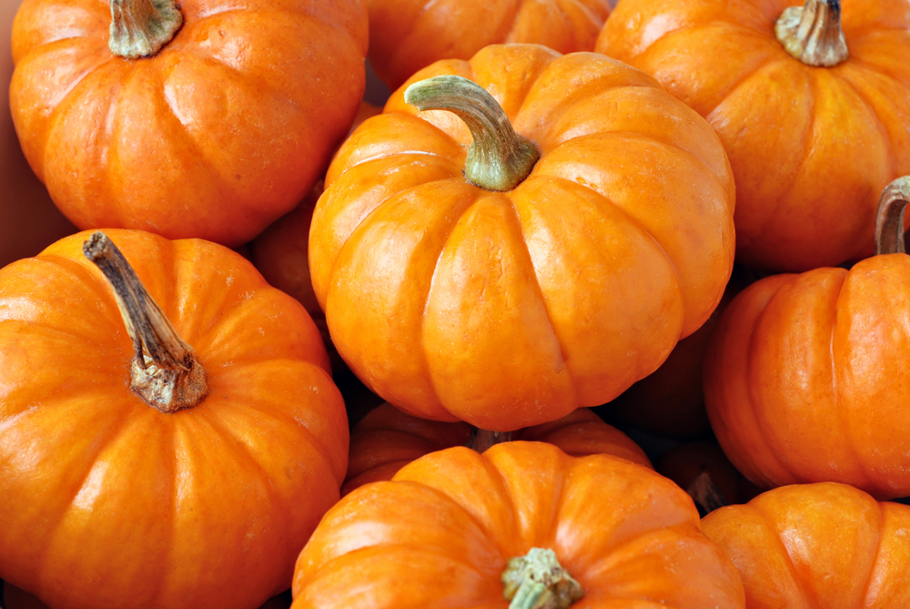 bigstock-Pumpkins-15025586(1).jpg