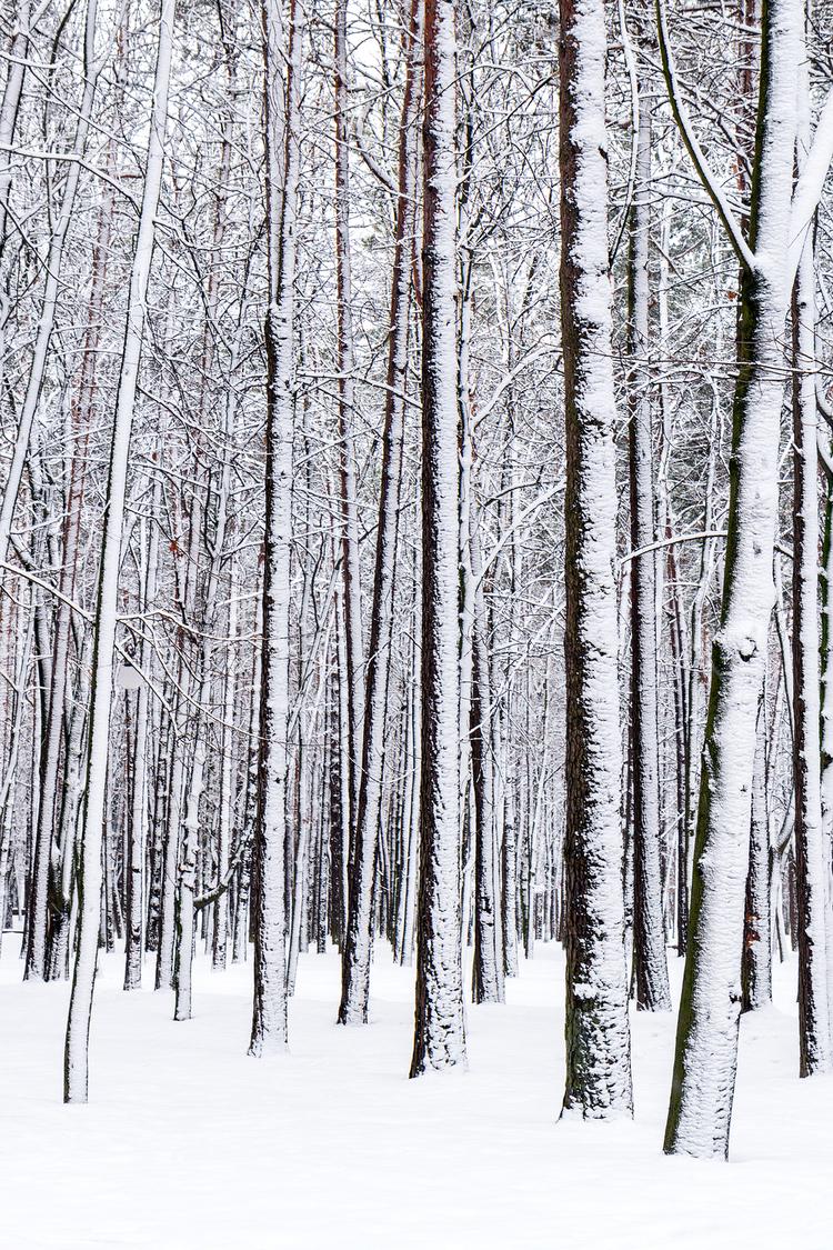 bigstock-Winter-Forest-56265137(1).jpg