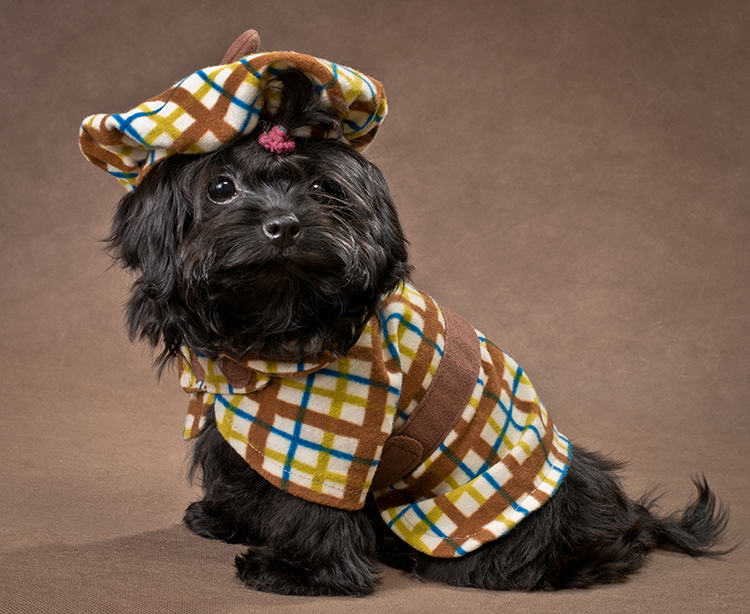 Dress up your pet day pictures