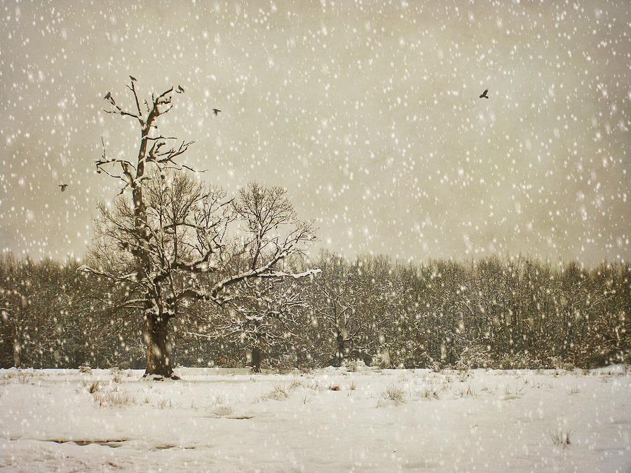 Winter photography | alin b.