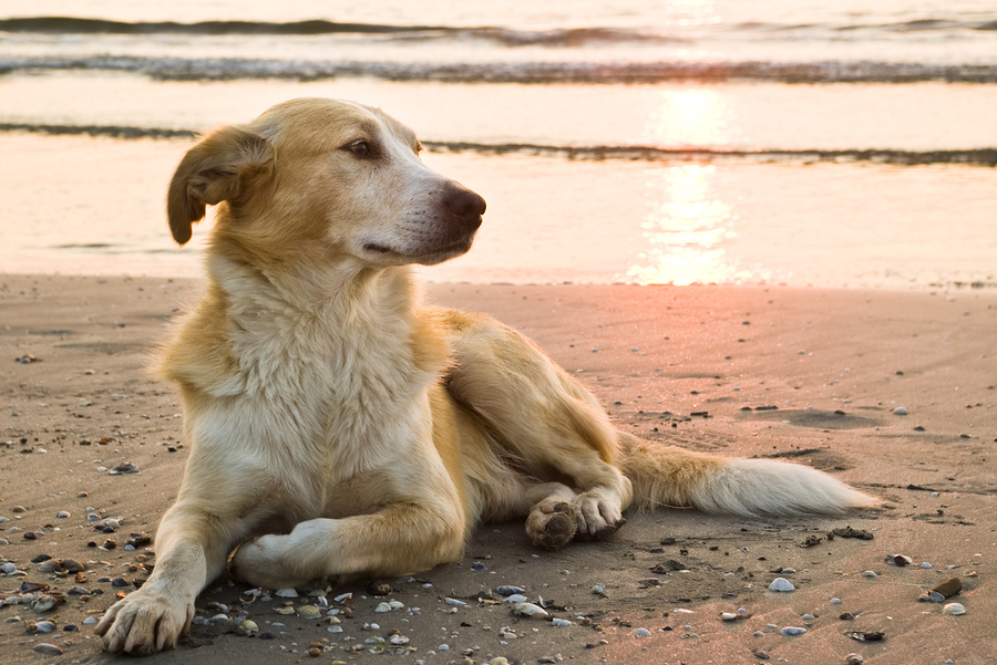 Stock photo of dog relaxing on the beach by mishoo.