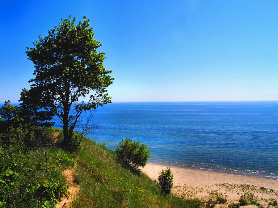 Image of tree on dune, Lake Michigan by Edward Stephens