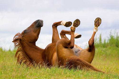 LOL Animals! 10 Hilarious Animal Photos