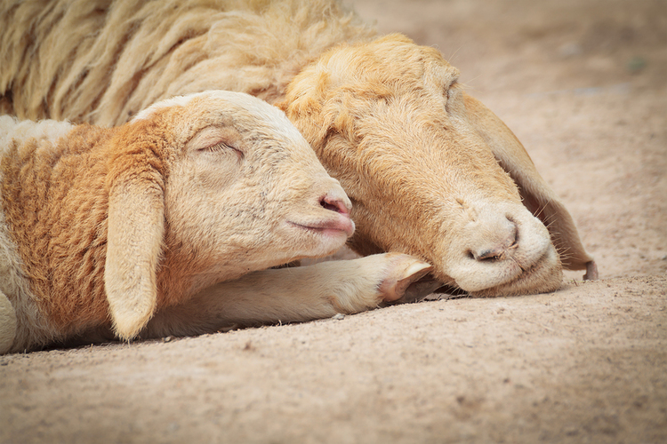 Barnyard Moms: A Mother's Day Collection of Animal Photography