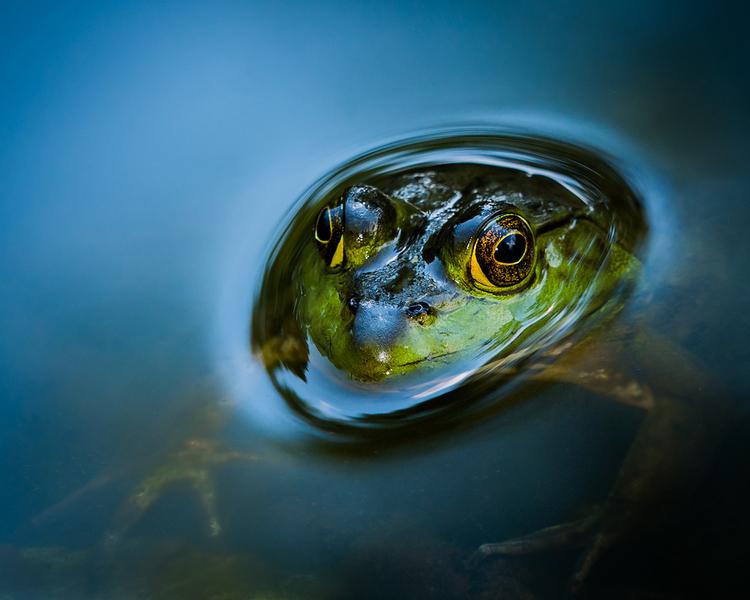 Wild Eyes: Captivating & Up-Close Animal Portraits