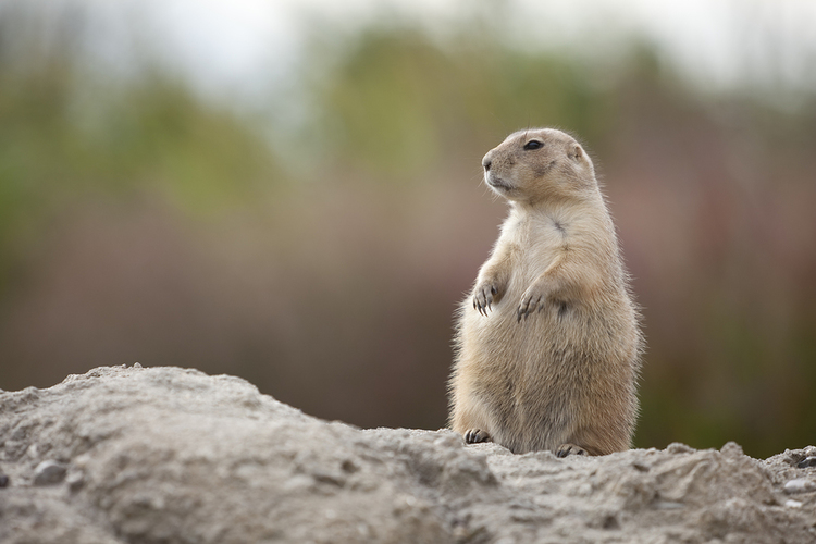 Groundhogs & Other Critters Who Are Over It