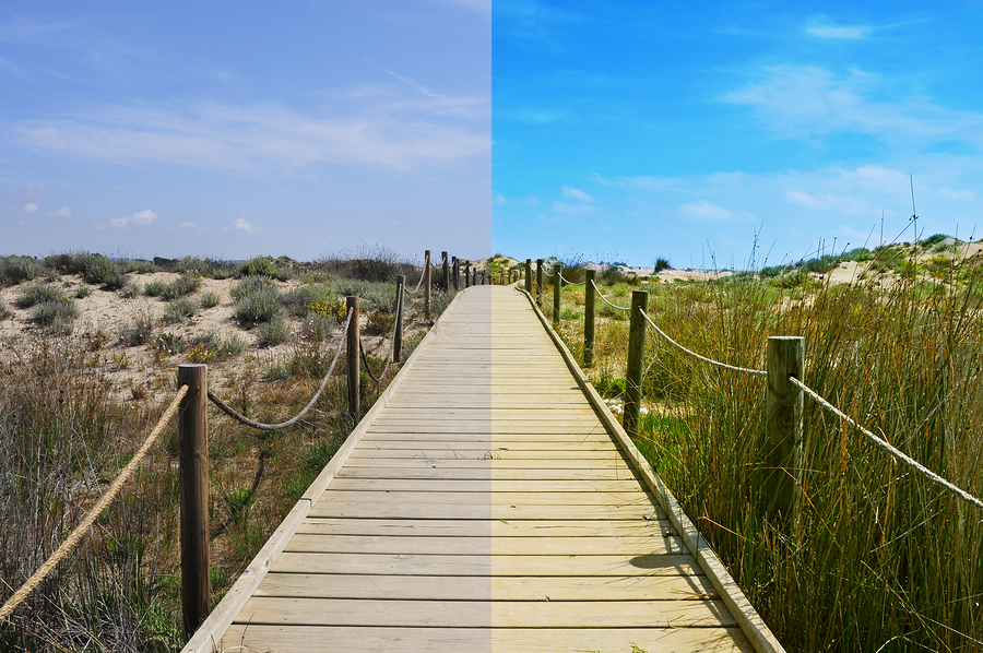 Split boardwalk image |  nito