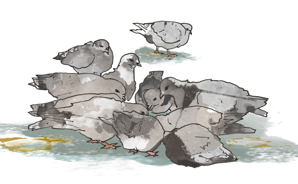 Illustration of revolting pigeons by Zenija Esmits