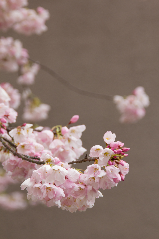 Blossom on 11th. ©2014  Helena McMurdo