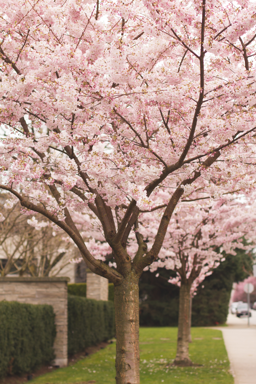 Blossom_HelenaMcMurdo