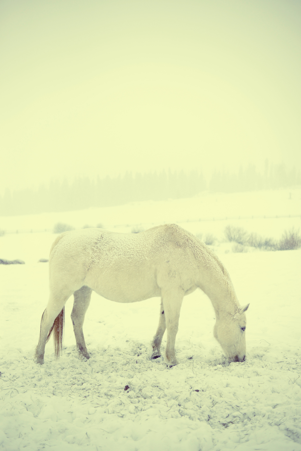 whiteonwhitehorse copy.jpg