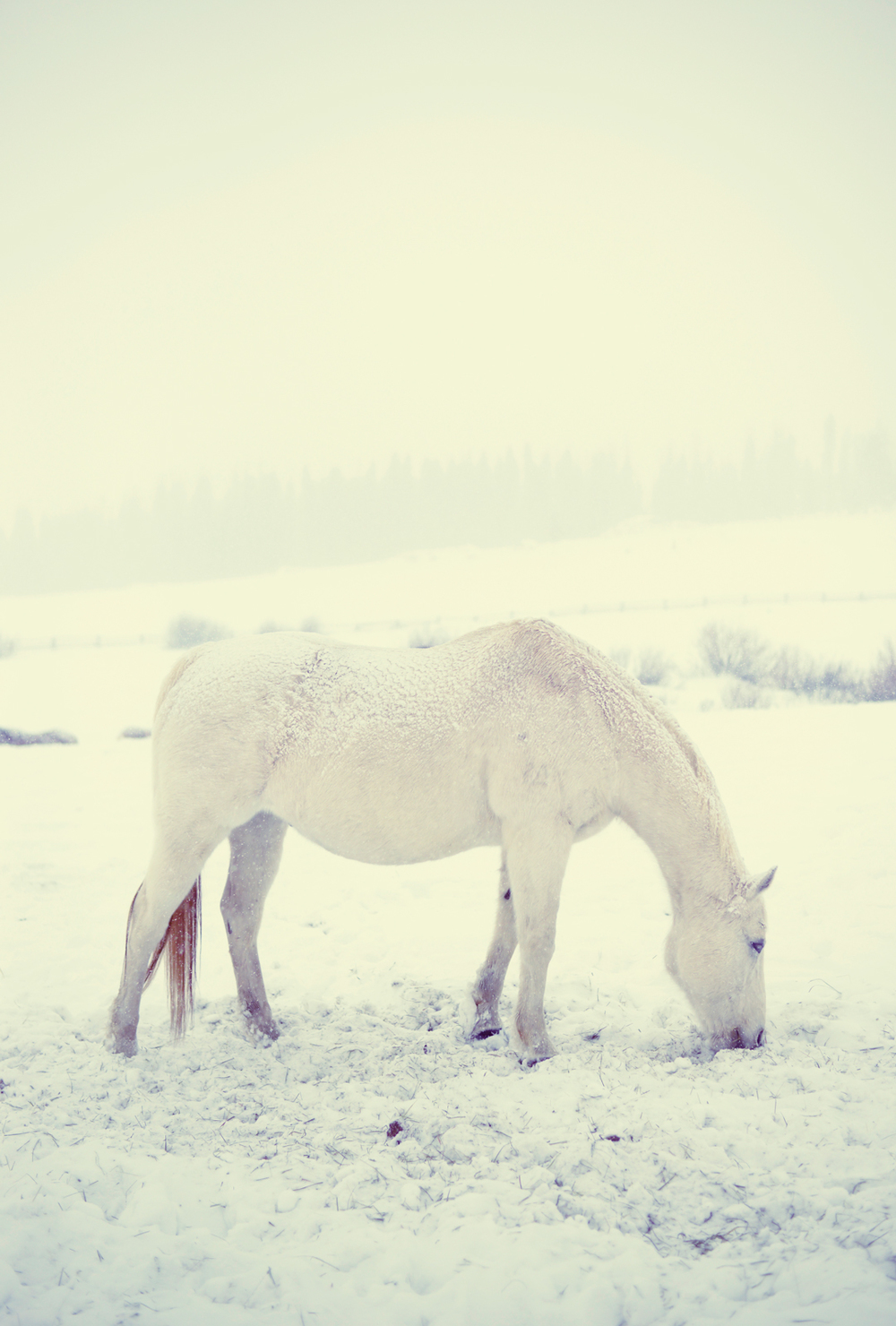 whiteonwhitehorse-copy.jpg