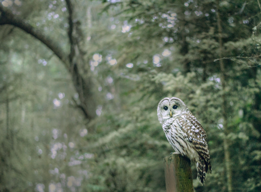 cori-storb-best-friend-barred-owl.jpg