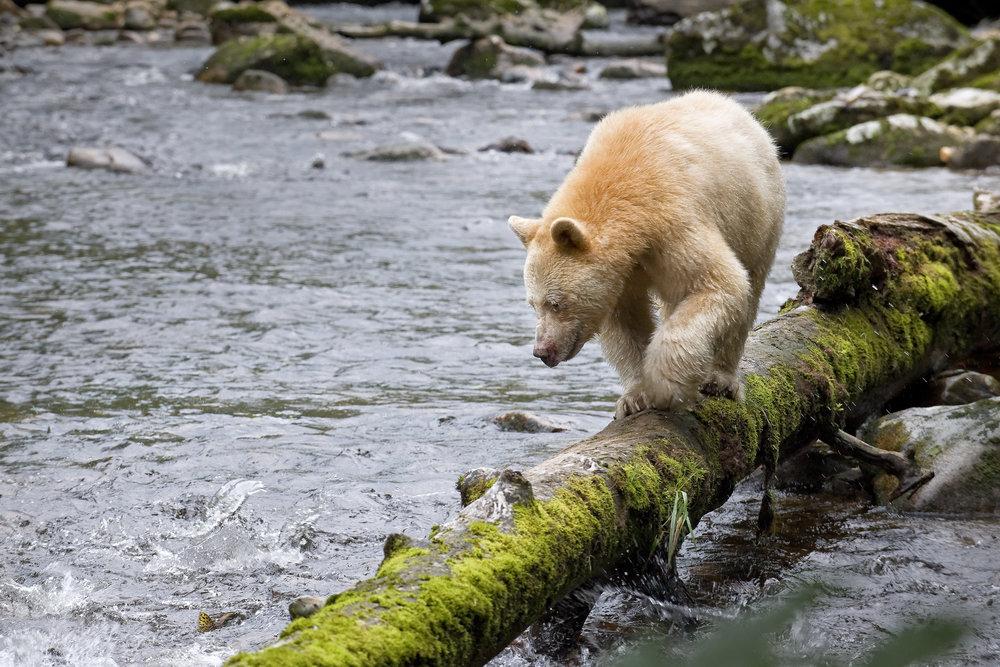 Photo courtesy of Sierra Club BC