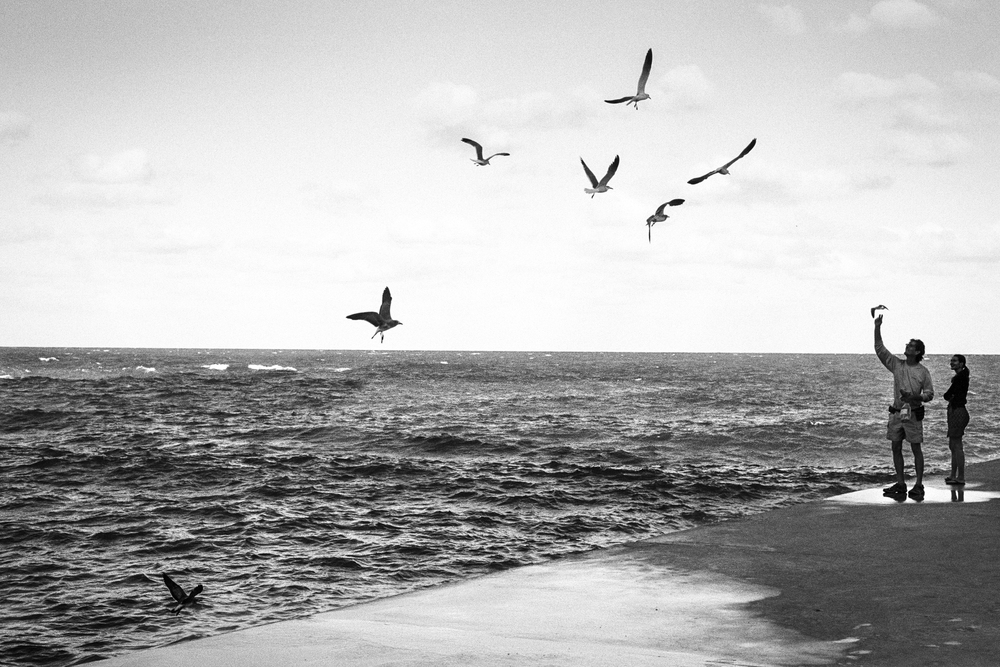 Gulls (1 of 1).jpg