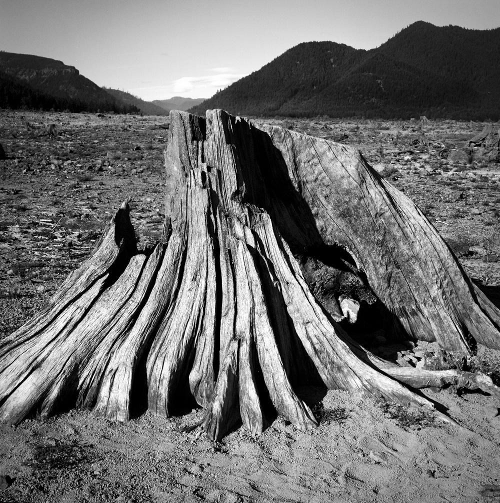 landscapedetriot (3 of 3).jpg