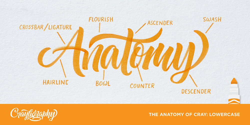 The Anatomy Of Cray: Lowercase Previous LessoN Get Cray!