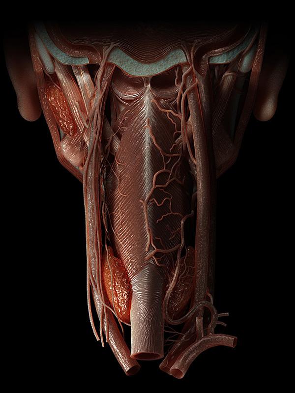 Anatomy Noir